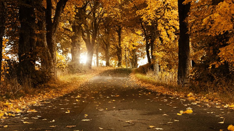 Fall-Nature-Background-Pictures